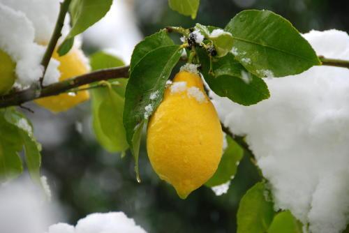 שלג (1)